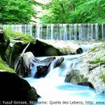 Wasser als Gesundheitsvorsorge - Quelle des Lebens